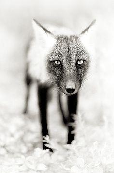 Foxy... ☀