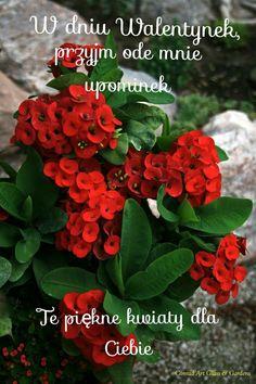 Valentines Day, Humor, Plants, Disney, Valentine's Day Diy, Humour, Funny Photos, Plant, Funny Humor