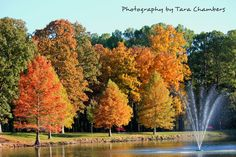 Autumn in West Frankfort.  Only place I have ever lived, and I'm fine with that.