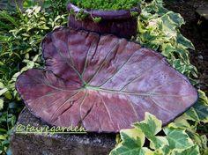 how to make a concrete leaf at http://fairegarden.wordpress.com/2011/08/22/how-to-make-leaf-castings/