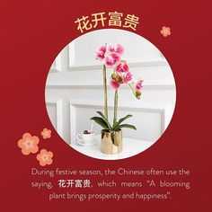 """Bite Size Trivia from us at Lim's Holland Village! The Chinese characters are pronounced """"Hua Kai Fu Gui"""". Orchids in full bloom in store welcome to our version of Gardens by the Bay Gardens By The Bay, Chinese Characters, Bite Size, Trivia, Holland, Kai, Orchids, Bloom, Seasons"""
