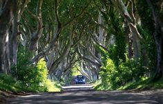 Dark Hedges, County Antrim, Northern Ireland - Peter Morrison/AP Photo