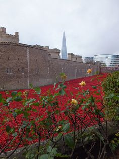 Tower of London Poppies - Yellow Roses and the Shard - November 2014 The Shard, Tower Of London, Yellow Roses, Seas, Monument Valley, Poppies, Blood, November, Louvre