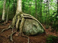 Strange Trees Growing In Strange Places (55 pics) - Picture