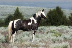 Andalusian Horse, Friesian Horse, Arabian Horses, Shadow Creatures, Cute Animal Photos, All About Horses, Black Horses, Wild Mustangs, Draft Horses