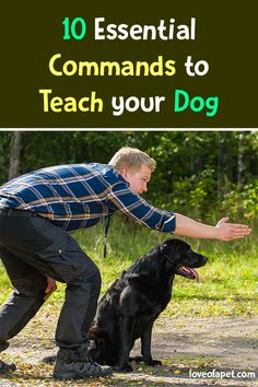 10 Essential Commands to Teach Your Dog - Love Of A Pet Dog Training Techniques, Dog Training Tips, Dog Care Tips, Pet Care, Dog Commands, Easiest Dogs To Train, Dog List, Secret Life Of Pets, Outdoor Dog
