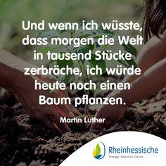 Was würdet ihr tun?! 🌳 #MartinLuther #Zitate #Sprüche #Umweltschutz Martin Luther, Environmentalism, Knowledge, Quotes