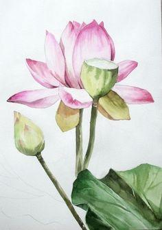 남일 수채화 Gallery Lotus Kunst, Lotus Art, Korean Painting, Chinese Painting, Lotus Painting, Fabric Painting, Watercolor Flowers, Watercolor Paintings, Composition Art