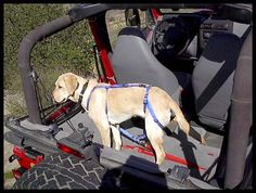 Special Dog harness for Wrangler? - JeepForum.com