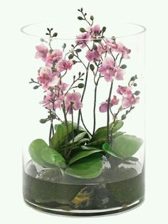Terrific Totally Free Orchids terrarium Ideas Orchid, your blossom connected with classiness and elegance elegance, has got around 700 styles, more than in Orchid Terrarium, Terrarium Wedding, Garden Terrarium, Succulent Terrarium, Terrarium Ideas, Orchids Garden, Orchid Plants, Indoor Water Garden, Indoor Plants