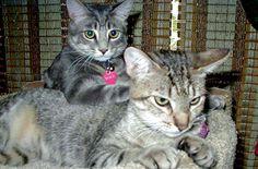 Toby and Kasha