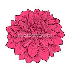 Dalia flor hermosa dibujado en estilo gráfico contornos y líneas, aisladas sobre fondo blanco — Ilustración de stock #40291577