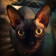 Eyes... living art.