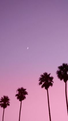 Palms sunset iphone wallpaper