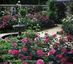 Front rose garden: Inspiration photo - believe my roses were wind-damaged so badly this year is due to sparse plantings. Plant more roses...