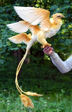 Thunderbird from Fantastic Beasts and Where to Find Them by J. Rowling Approx… Thunderbird from Fantastic Beasts and Where to Find Them by J. Rowling Approximately 35 cm in length (excluding tail) – Completely handmade. Cute Fantasy Creatures, Magical Creatures, Beautiful Creatures, Weird Creatures, Pretty Birds, Beautiful Birds, Animals Beautiful, Beautiful Pictures, Beautiful Places