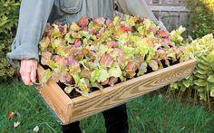 Portable Salad Box: Organic Gardening