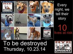 TO BE DESTROYED: 10 Dogs to be euthanized by NYC ACC- THURS. 10/23/14. This is a HIGH KILL shelter group. YOU may be the only hope for these pups! ****PLEASE SHARE EVERYWHERE!!! To rescue a Death Row Dog, Please read this: www.urgentpetsond... To view the full album, please click here: www.facebook.com/...