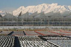 Outdoor plant nursery in Utah.