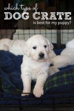 Which type of dog crate is best for a puppy?