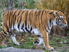 Mahananda Wildlife Sanctuary - in West Bengal, India