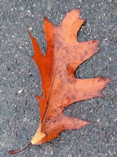 Day 64 - Autumn leaves