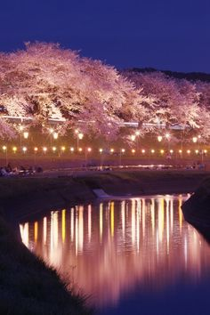 Cherry tree in full bloom, | http://awesomepaiting.blogspot.com