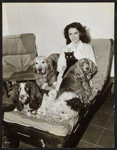 Elizabeth Taylor with black cat, collie, cocker and springer