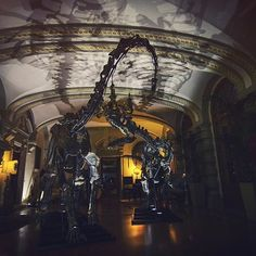 """Say Hi to """"Kan"""" & """"Daffy"""", new members of the Theatrum Mundi family. Here during the #dinoparty in a tuscan villa. Pt.2 #wunderkammer #dinosaurs #allosaurus #cabinetofcuriosities #villa"""