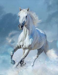 Beautiful Arabian Horses, Most Beautiful Horses, Animals Beautiful, Cute Horses, Pretty Horses, Horse Love, Horse Photos, Horse Pictures, Horse Drawings