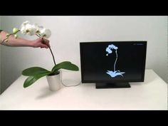 Plant-Controlled Touch Software That Makes Music #technology