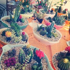 """I absolutely love that cacti and succulents are """"in"""" right now. I live in Phoenix so cacti and succulents come a plenty and, the best par..."""