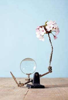 Blossom by Marc Hibbert