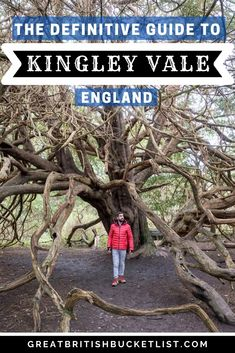Do you fancy walking in the footsteps of ancient druids & Viking kings? Then check out my detailed guide to the Kingley Vale walk in England. Amazing Destinations, Travel Destinations, Cotswold Villages, Mountain Images, Dreamy Photography, Weekend Breaks, Best Places To Travel, Amazing Adventures, Lonely Planet