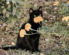 "carla-enjoys: ""Filed under impressive looking black cats """