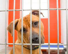 Humane Animal Rescue in Pennsylvania tells people exactly how they can support their efforts Animal Shelter, Animal Rescue, Marketing Communications, Pennsylvania, Labrador Retriever, Pitbulls, Dogs, People, Animals
