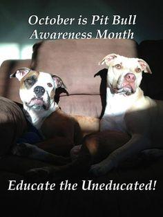 October - Pit Bull Awareness Month