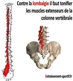 La lombalgie est principalement causée par le multifidus, muscle extenseur de la colonne vertébrale. Des exercices ciblés sur ce muscle peuvent la soulager