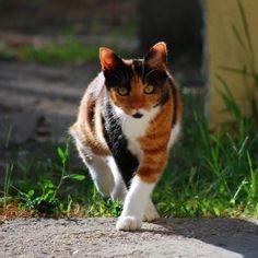 This cat is so striking. Beautiful animal.