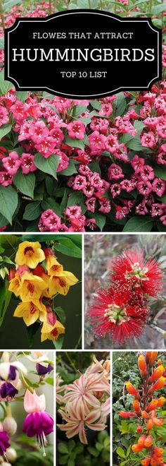 Top 10 Pretty Plants that Attract Hummingbirds : Top Inspired