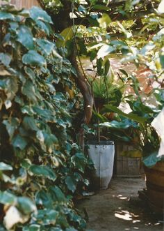 The backyard at Bocaccio