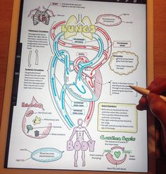 "1,663 Likes, 115 Comments - Sarah Clifford Illustration (@sarahjclifford) on Instagram: ""Working out how to add text to my diagrams on the iPad Pro! Just about finished the cardiovascular…"""