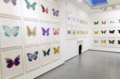 DAMIEN HIRST The Souls Butterfly Print. Silkscreen and foil block, signed. Modern Artists, Contemporary Artists, Damien Hirst, Public Art, Art And Architecture, Installation Art, Fine Art Prints, Art Gallery, Painting