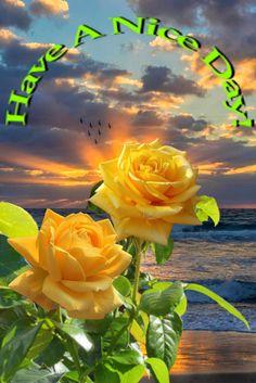 Beautiful Morning, Good Morning, Morning Greeting, David, Buen Dia, Bonjour, Bom Dia