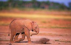#honest #elephant Happy Elephant, Elephant Love, Baby Animals, Cute Animals, Elephant Wallpaper, Tshirt Photography, Majestic Animals, African Elephant, Gentle Giant