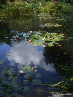 Monet's lily pond in Giverny France. See all pictures at A Traveler's Library. Claude Monet, Monet Paintings, Landscape Paintings, Landscapes, Landscape Photography, Nature Photography, Lily Pond, Water Lilies, Giverny France