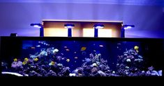 Amazing Aquariums, End Of The Week, Excellence Award, Reef Aquarium, Corals, See You, Team Building, Ems, Friday