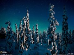 National Geographic Russia Snow-covered fir frozen against the sky illuminated by the Northern Lights over Finland