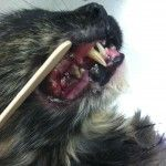 Pets require Dental Care year round - Read more and learn why!