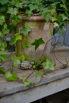 Easy To Grow Houseplants Clean the Air Kronrtskocka I Koppar Inside Plants, Ivy Plants, Woodlands Cottage, Dark Tree, Covered Garden, Rose Cottage, French Cottage, Cottage House, Ivy House